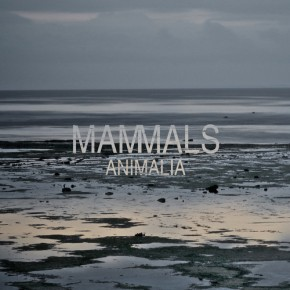 Mammals – Animalia